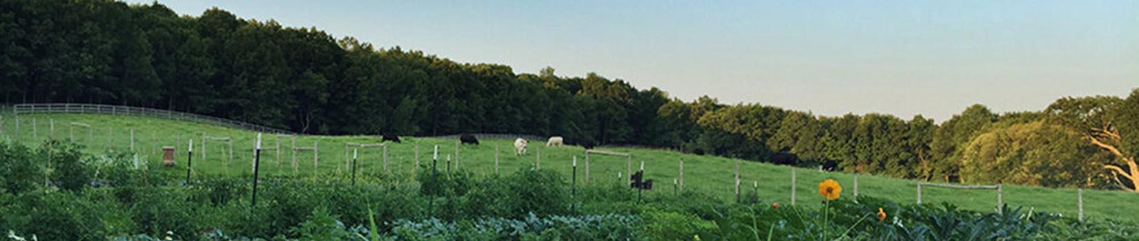 Sky High Farm