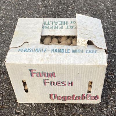 Fingerling Potatoes Case